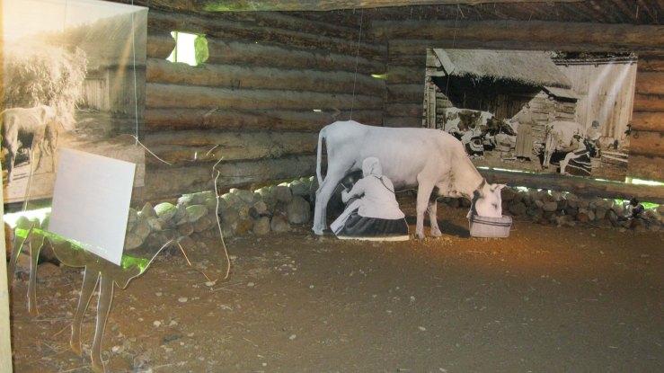 milking exhibit