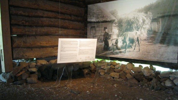 cow exhibit